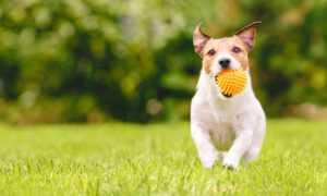 tepihland umjetna trava vrt pas ljubimci